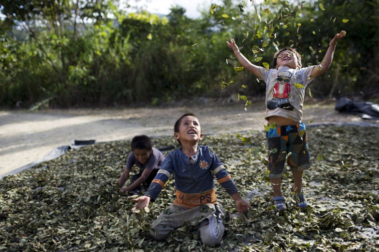 """In this March 13, 2015 photo, Yohan, 4, from left, Cristian, 7, and Angelo, 6, playfully toss coca leaves into the air, singing: """"I have a lot of money, look at all the money I have,"""" in La Mar, province of Ayacucho, Peru. Hauling cocaine out of the remote valley is about the only way to earn decent cash in this region where a farmhand earns less than $10 a day. Beyond extinguishing young lives, the practice has packed Peruís highland prisons with cocaine backpackers while their bosses evade incarceration. (AP Photo/Rodrigo Abd)"""