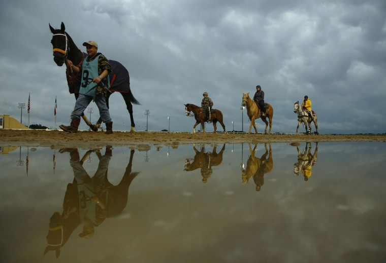 Horse trainers walk the horses to the gates before the eighth race at Lone Star Park Monday, May 25, 2015, on a rainy day in Grand Prairie, Texas. (Nathan Hunsinger/The Dallas Morning News via AP)