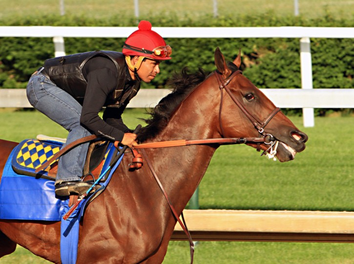 Jockey Martin Garcia rides Kentucky Derby and Preakness Stakes winner American Pharoah during a morning workout at Churchill Downs in Louisville, Ky., on Tuesday. American Pharoah is preparing for a start in the Belmont Stakes in New York on June 6. (Garry Jones/AP)