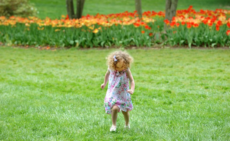 "lexa Lyons, 3, explores Sherwood Gardens. According to the Guilford Association, ""Approximately 80,000 tulip bulbs are planted annually along with other spring flowering bulbs."" (Algerina Perna/Baltimore Sun)"
