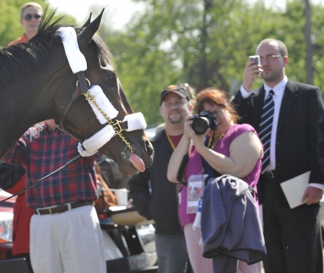 Rachel Alexandra heads for the stakes barn at Pimlico. (Jed Kirschbaum/Baltimore Sun)
