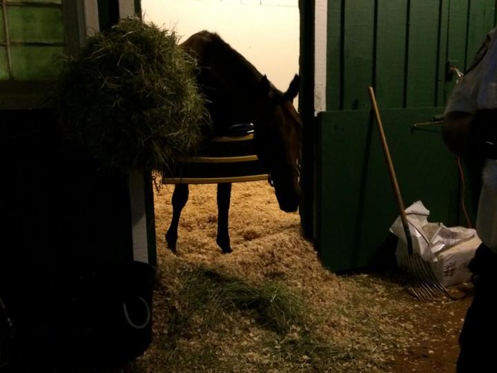 Preakness winner American Pharoah after the race. (Quinn Kelley/Baltimore Sun)