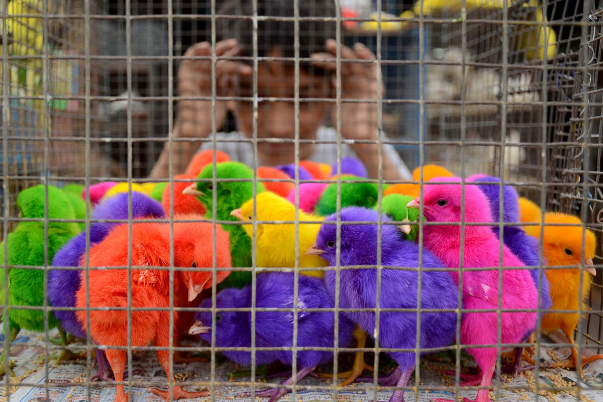 Colorful chicks, bombs, and sports June 3