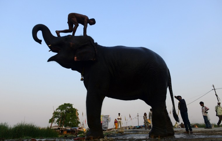An Indian mahout washes his elephant on a roadside in Allahabad on Tuesday. (Sanjay Kanojia/AFP/Getty Images)