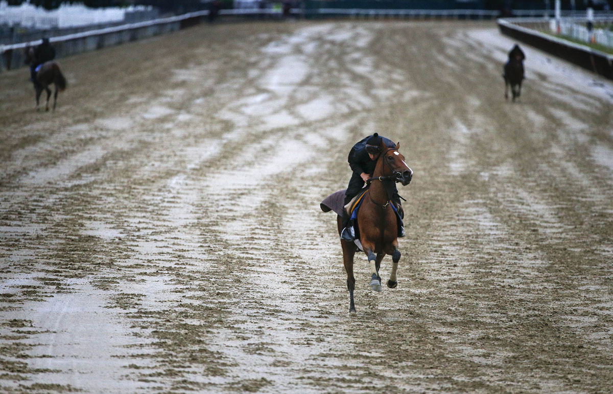 Horses prepare for the 147th Belmont Stakes