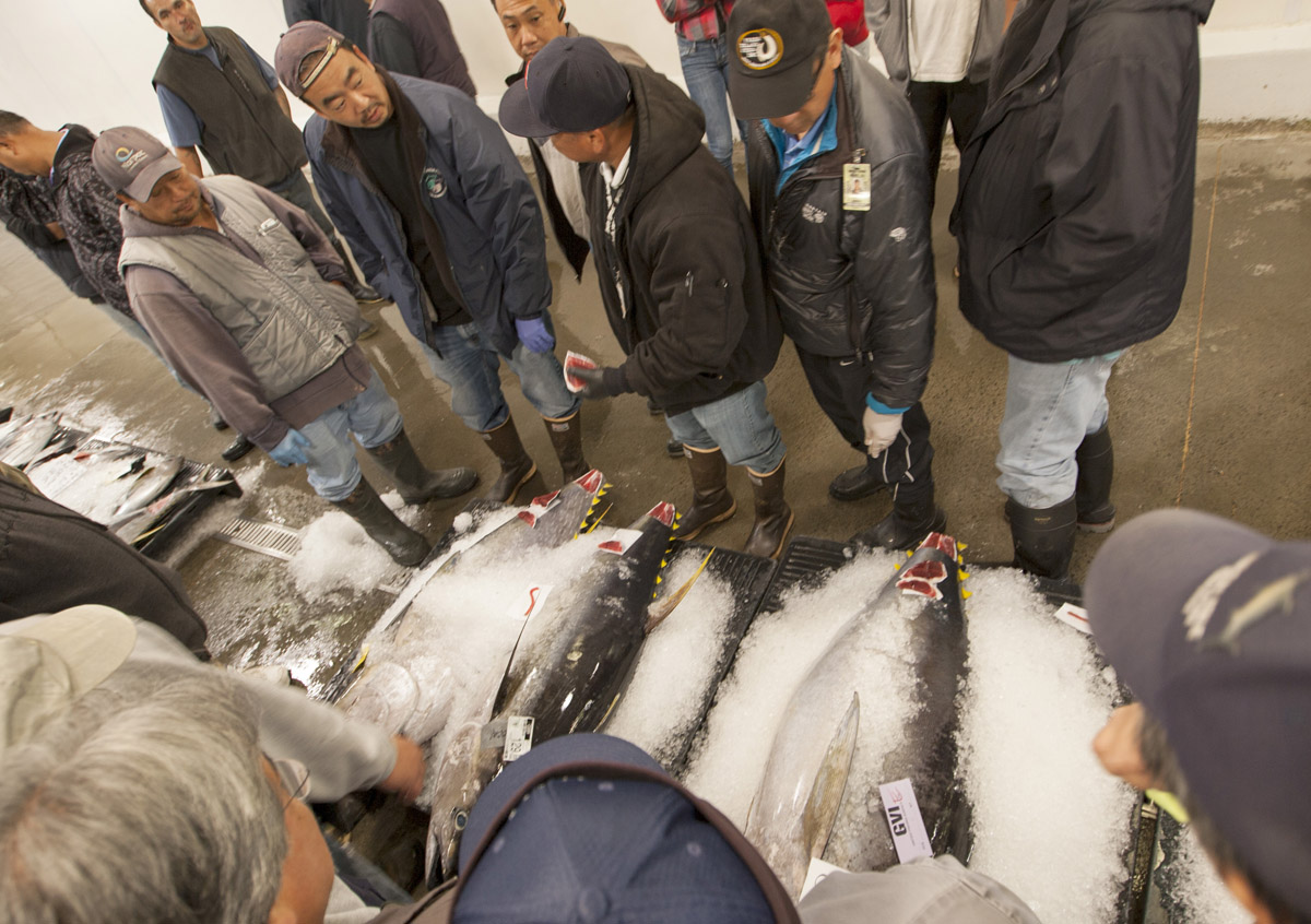 The largest fish auction in the world for United fishing agency