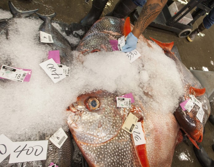 The largest fish auction in the world