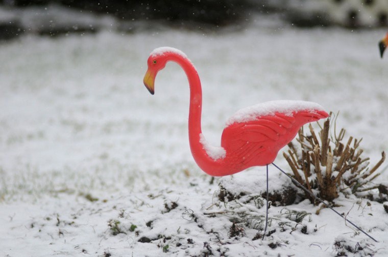 A light snow falls on a pink plastic lawn flamingo in Pottsville, Pa. Donald Featherstone, the creator of the pink plastic lawn flamingo, died Monday, June 22, 2015, at an elder care facility in Fitchburg, Mass., according to his wife, Nancy. He was 79. (Jacqueline Dormer/Republican-Herald via AP, File)