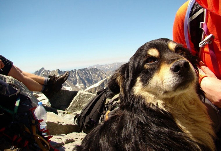 This photo from Friday shows a dog who was abandoned on Poland''s highest mountain, Rysy, in the Tatra mountains, possibly taken there to die, and discovered on Friday. By chance a group of climbers found him, and using ropes and chains successfully brought the frightened dog down from the craggy and icy mountain peak in an operation that took 10 hours. The frightened dog didn''t always want to cooperate, making the operation more difficult.(Dariusz Slaby/AP)
