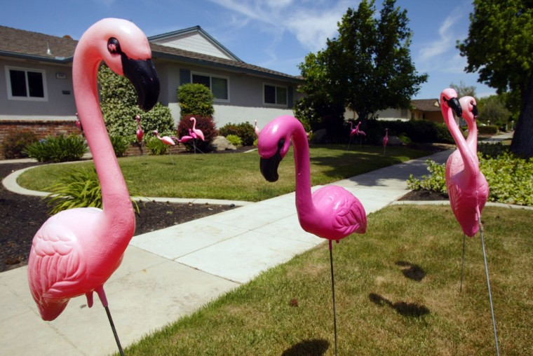 Students from the Seventh Day Adventist Academy in Fresno, California sneak up homes and plant 24 pink, plastic flamingoes in the front yard, as pictured May 12, 2007. A note is left in the yard asking for a donation to be used for class activities. (Diana Baldrica/Fresno Bee/MCT)
