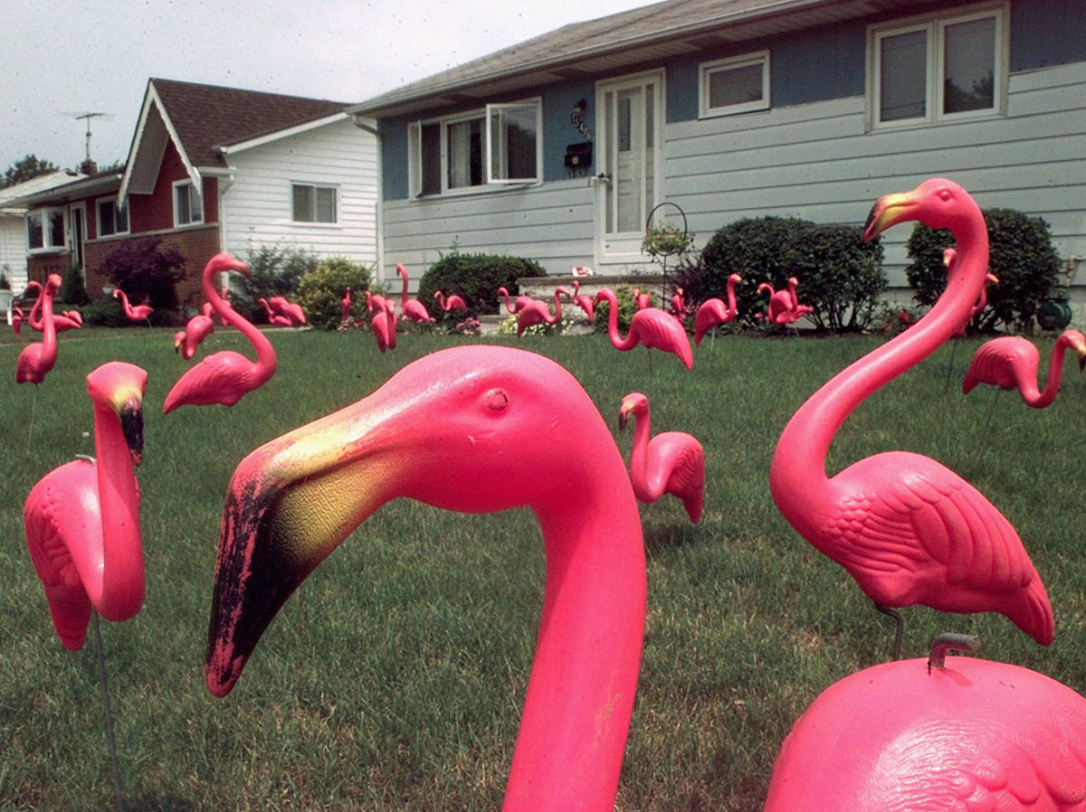 "the plastic pink flamingo ap essay The flamingo had been ""hunted to extinction"" in the 1800s and conveyed one century later, americans enshrined the pink plastic version it was conveyed by placing it on their front lawns this was chain effect."