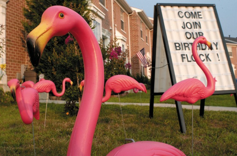 """Edith Goldman's company """"Flamingo Smiles"""" places the pink lawn ornaments in customers' yards to surprise them on their birthdays, anniversaries, or graduations. Goldman has been spreading joy in Columbia with flamingos for about a year. (Baltimore Sun archives)"""