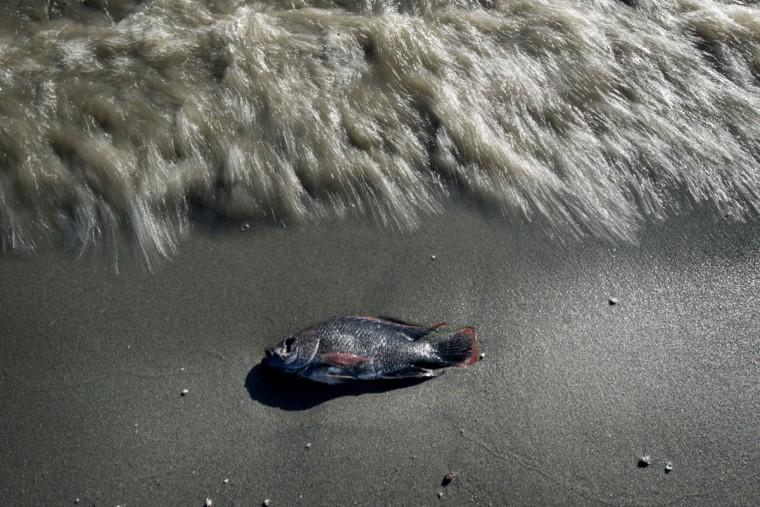 California s shrinking salton sea for Salton sea fishing
