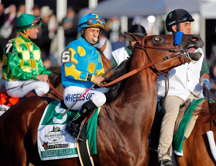 American Pharoah #5, ridden by Victor Espinoza, is led to the starting gate during the 147th running of the Belmont Stakes at Belmont Park in Elmont, New York. (Rob Carr/Getty Images)