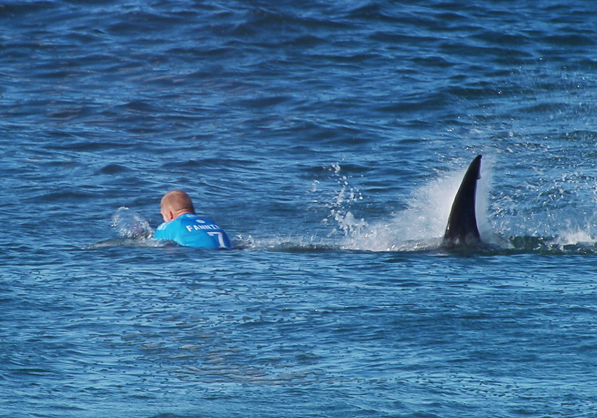 Surfing competition shark attack, Eid al-Fitr, sprint finish in the Tour, Filipino Zumba record  July 19