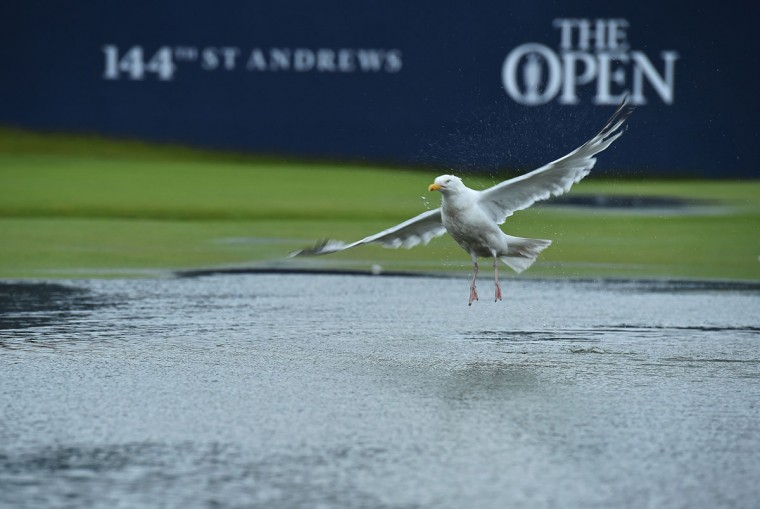 A gull joys the water-logged 1st fairway after heavy rain make the course unplayable early on the second day of the 2015 British Open Golf Championship on The Old Course at St Andrews in Scotland, on July 17, 2015. By 8:00 p.m. (0700GMT) large puddles had formed on the Old Course's fairways and greens as the deluge continued and director of greenkeeping Gordon Moir said that no time could yet be set for play to resume. (AFP Photo/Ben Stansall)
