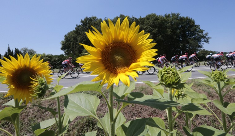 The pack passes a field with sunflowers during the tenth stage of the Tour de France cycling race over 103.8 miles with start in Tarbes and finish in La Pierre-Saint-Martin, France, on Tuesday. (Christophe Ena/AP)