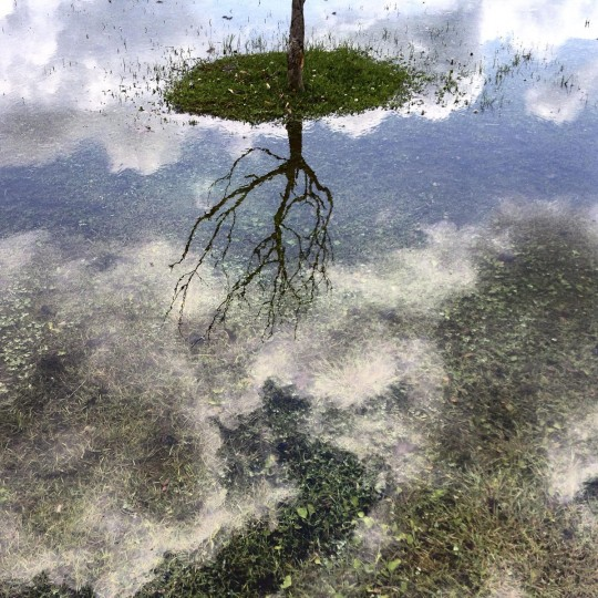 A tree is reflected in a puddle at Wahconah Park in Pittsfield, Mass. on Wednesday, July 1, 2015. The total rainfall for June was 8.1 inches in Pittsfield, making it one of the wettest Junes on record after having a moderate drought declared in May. (AP Photo/The Berkshire Eagle, Ben Garver)