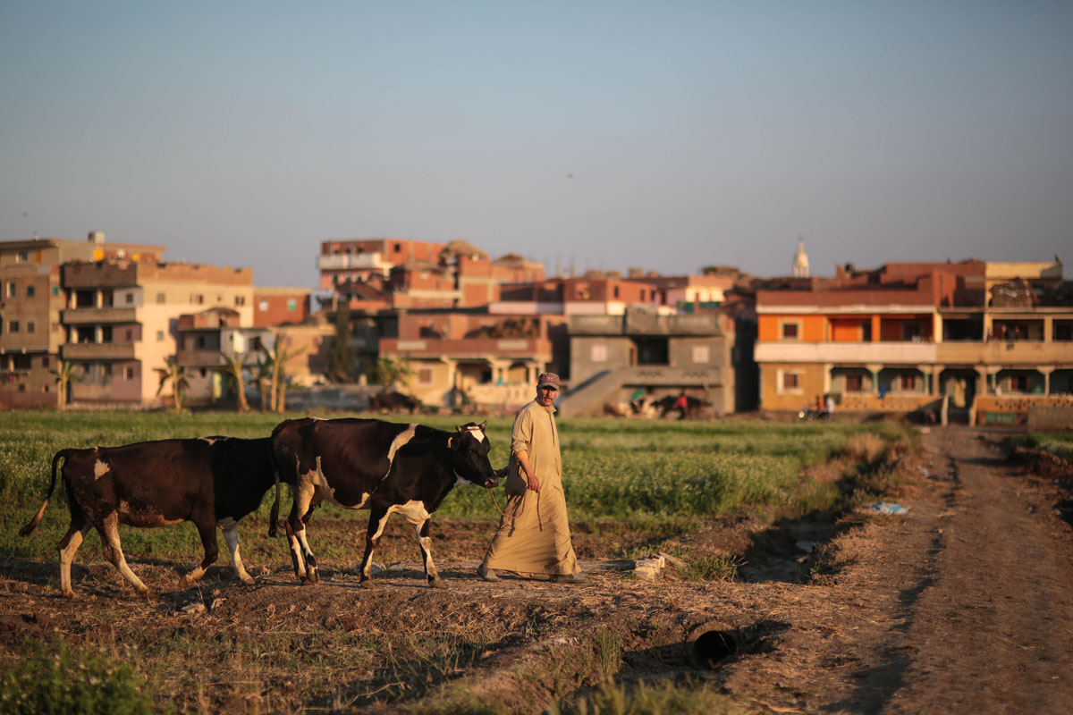 Egypt's Urban Expansion Depletes Nile Farmland
