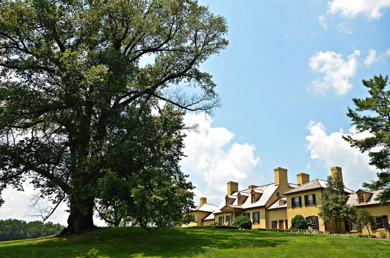 The large English elm tree on the left in this photo will be cut down soon due to disease. It is believed the elm has provided shade to the front lawn of Belmont Manor for more than 200 years. (Photo by Alan White)