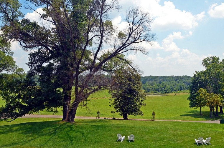 This view from a second-story window of Belmont Manor looks out over the front lawn and the large English elm that will be cut down in July due to disease. (Photo by Alan White)