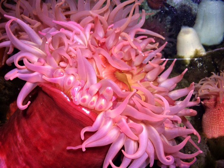 """With fronds like these, who needs anemones"""
