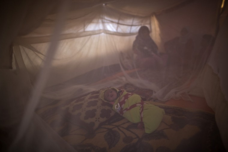 In this Sunday, July 26, 2015 photo, Syrian refugee infant Mohammed Ali, 43 days, sleeps inside a mosquito net at his family's tent at an informal tented settlement near the Syrian border on the outskirts of Mafraq, Jordan. Of the 4 million refugees who fled Syriaís grinding civil war, it is the conflictís youngest exiles who often bear the brunt of its woes. (AP Photo/Muhammed Muheisen)