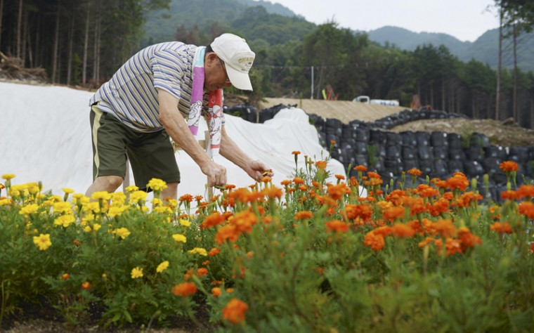 Shinzo Tachikawa takes care of flowers at the site where his brother and sister-in-law used to live in Hiroshima, on Aug. 7. Sandbags are piled on slopes where scars left by the landslide are still visible. (The Japan News/Yomiuri)