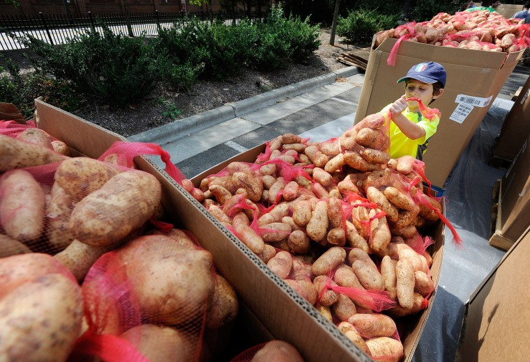 Marco Gullotto, 7, helps to bag potatoes on Saturday, Aug. 29, 2015 in Durham, N.C. Hundreds of volunteers from the Duke University and Durham community bagged 40,000 pounds of potatoes to distribute to local food relief agencies. (Christine T. Nguyen/The Herald-Sun via AP)