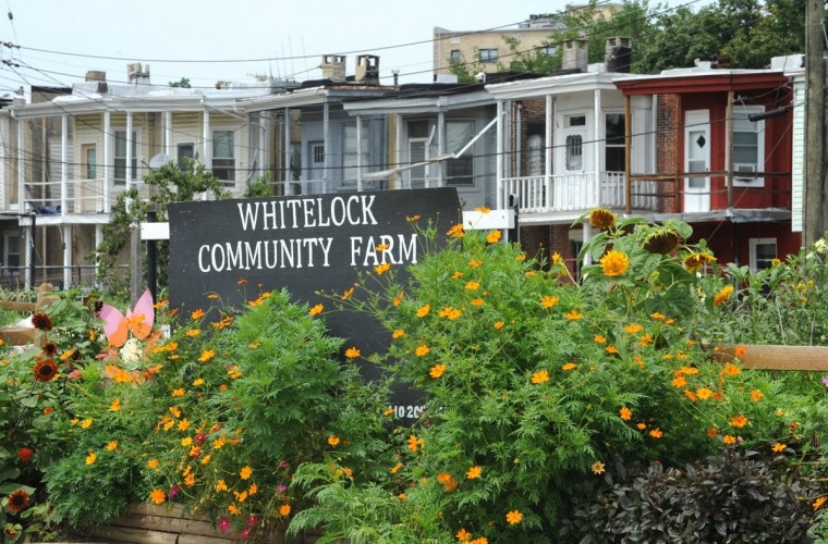 Elisa Lane is the farm manager of Whitelock Community Farm in Reservoir Hill. (Algerina Perna / Baltimore Sun / Aug. 7, 2012)