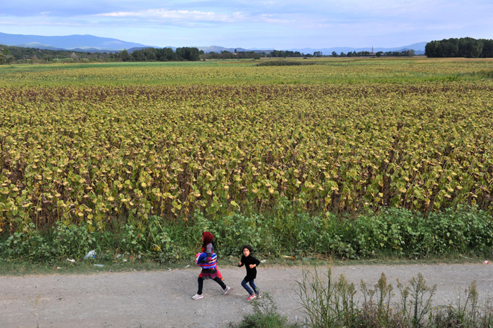 "Migrants and refugees are seen walking past sunflowers close to the Greek-Macedonian border near the village of Idomeni, in northern Greece on Tuesday. Fresh clashes erupted between police and migrants on the Greek island of Lesbos, the latest flashpoint of the crisis shaking Europe as EU President Donald Tusk warned the refugee ""exodus"" could last for years. (SAKIS MITROLIDIS/AFP/Getty Images)"