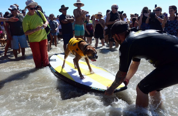 A crowd gathers close to the water to watch as dogs, big and small, and some in tandem or with their owner, participate in the 7th annual Surf City Surf Dog contest in Huntington Beach, Calif., on Sept. 27, 2015. (FREDERIC J. BROWN/AFP/Getty Images)