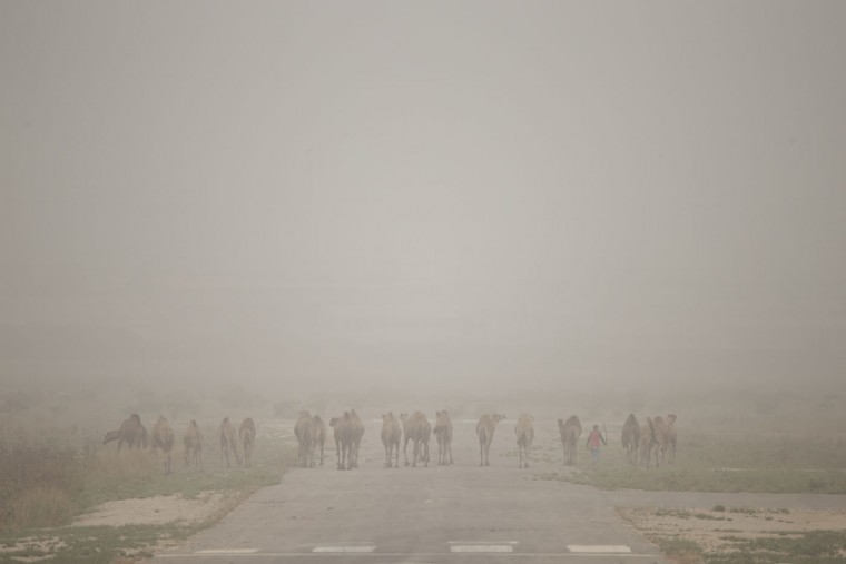 An Arab Israeli man walks with his camels on a closed air field during a sandstorm near the Arab town of Qalansuwa, Israel, Thursday, Sept. 10, 2015. The unseasonal sandstorm has swept across the Mideast, blanketing Beirut, Cairo and Damascus and causing the deaths of at least five people and sending hundreds of others to hospitals with breathing problems. (AP Photo/Ariel Schalit)