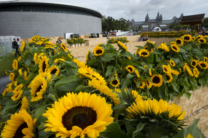 Workers construct a labyrinth with 125,000 sunflowers to mark the opening of the new entrance to the Van Gogh museum, left, and the 125th anniversary of the Dutch master's death, in Amsterdam, Netherlands, on Tuesday. Rear right is the Rijksmuseum, home to Rembrandt's Night Watch. (Peter Dejong/AP)