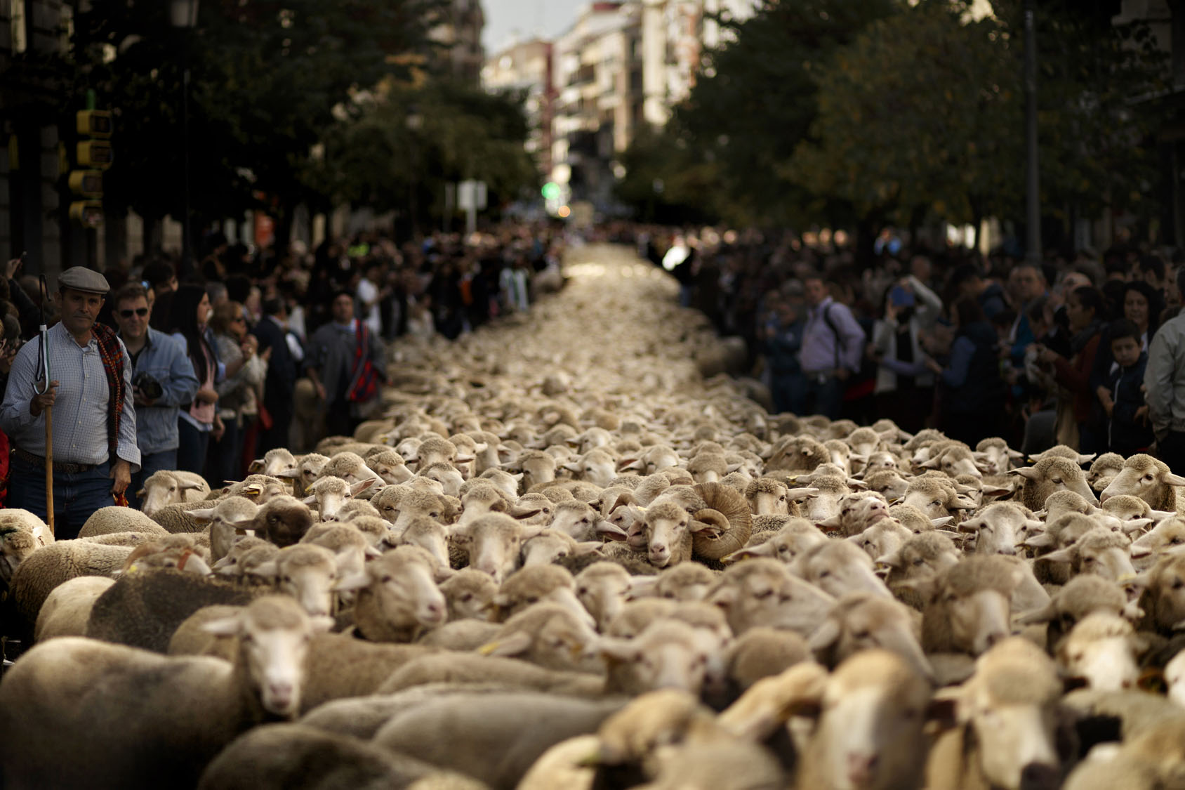 Sheep in Spain, elections around the world, Halloween in the Philippines | Oct. 25