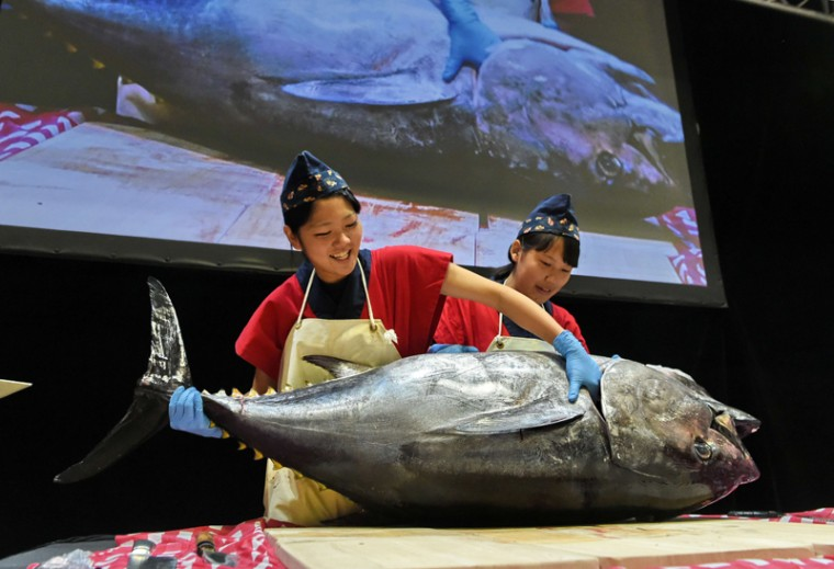 Two trained Japanese culinary experts from Ehime prefecture Japan prepare to cut a 132-pound maguro (tuna) fish during a demonstration at the Oishii Japan food and beverage exhibition in Singapore on Thursday. Oishii Japan is ASEAN's largest dedicated showcase on Japanese food and beverage participated by 42 prefectures exhibiting Japan's rich food culture. (ROSLAN RAHMAN/AFP/Getty Images)