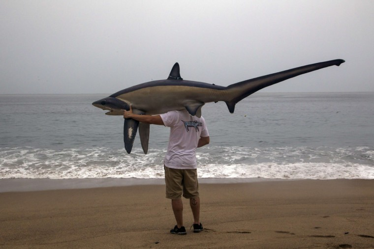 A man walks with a figure of a shark before the arrival of hurricane Patricia in Puerto Vallarta, Mexico on October 23 ,2015. Monster Hurricane Patricia roared toward Mexico's Pacific coast on Friday, prompting authorities to evacuate villagers, close ports and urge tourists to cancel trips over fears of a catastrophe. The US National Hurricane Center called Patricia the strongest eastern north Pacific hurricane on record. It said the storm will make a potentially catastrophic landfall later Friday in southwestern Mexico.    (HECTOR GUERRERO/AFP/Getty Images)
