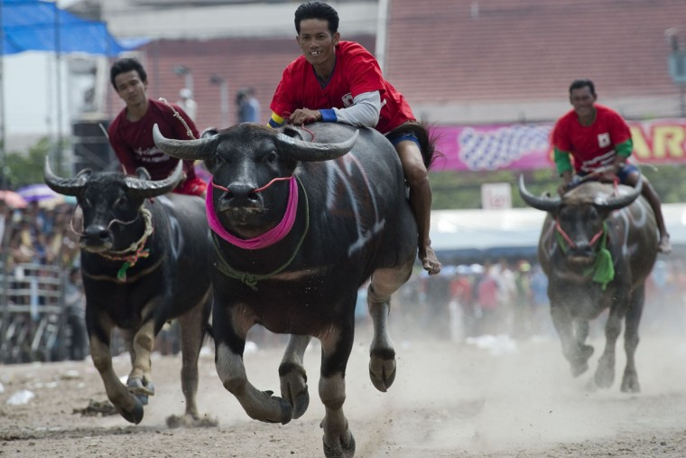 Participants take part in the annual buffalo races in Chonburi, southeast of Bangkok on October 26, 2015. Scores of Thai farmers ditched their paddy fields for the race course to sprint across a dusty track on prized water buffalo, vying for glory in a decades-old racing contest. (NICOLAS ASFOURI/AFP/Getty Images)