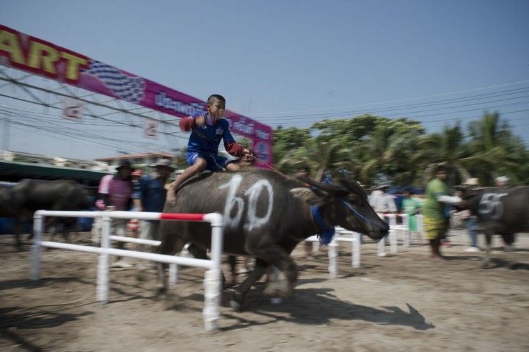 A participant takes part in the annual buffalo races in Chonburi, southeast of Bangkok on October 26, 2015. (NICOLAS ASFOURI/AFP/Getty Images)