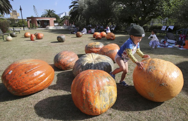 A boy plays with pumpkins harvested in Hitachiomiya, northeast of Tokyo, on display for the upcoming Halloween at Yumenoshima Tropical Greenhouse Dome in Tokyo on Tuesday. (Koji Sasahara/AP)