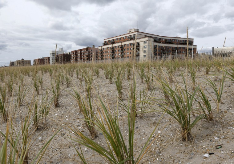 Anti-erosion sea grasses are planted neatly in rows on the third anniversary of Superstorm Sandy in New York, Tuesday, Oct. 27, 2015. Since the storm, more than $140 million has been invested to repair and restore the heavily eroded beach and damaged boardwalk. But recovery is ongoing with efforts to provide long-term protection for the vulnerable and environmentally sensitive area. (AP Photo/Kathy Willens)