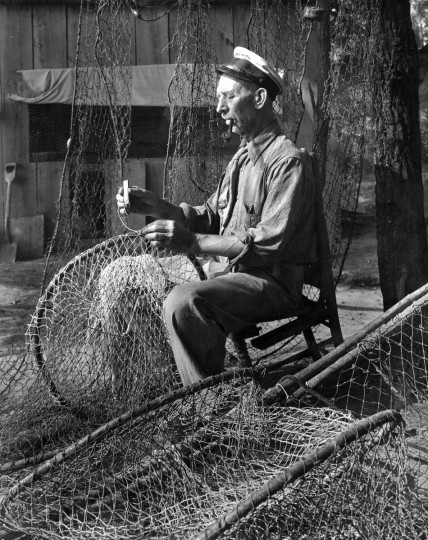 1960 - The net that is being mended is a fyke - a long, bag type held open by a series of hoops. This type produces most of the State's catch of yellow perch, which are abundant in the upper bay area. It is little used for taking other commercial species. (A. Aubrey Bodine/Baltimore Sun)