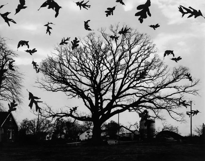 1957 - The Great Wye Oak. (A. Aubrey Bodine/Baltimore Sun)