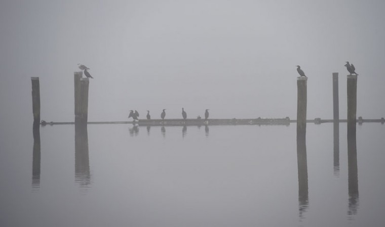 Cormorants sit on poles in the Schlei, a narrow inlet of the Baltic Sea, as fog lays over Schleswig, northern Germany, on Tuesday. (CARSTEN REHDER/AFP/Getty Images)