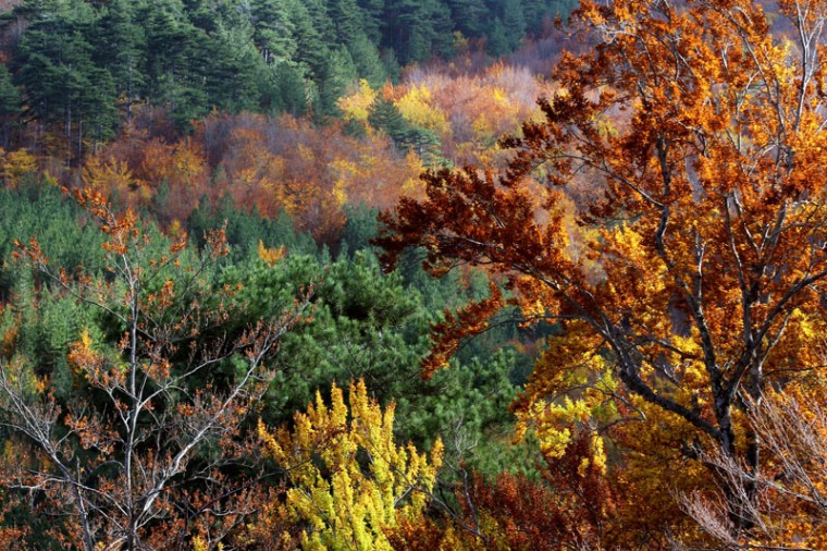 This picture taken on Monday shows a view of the Vizzavona forest in Vivario on the French Mediterranean island of Corsica, southern France. (PASCAL POCHARD CASABIANCA/AFP/Getty Images)