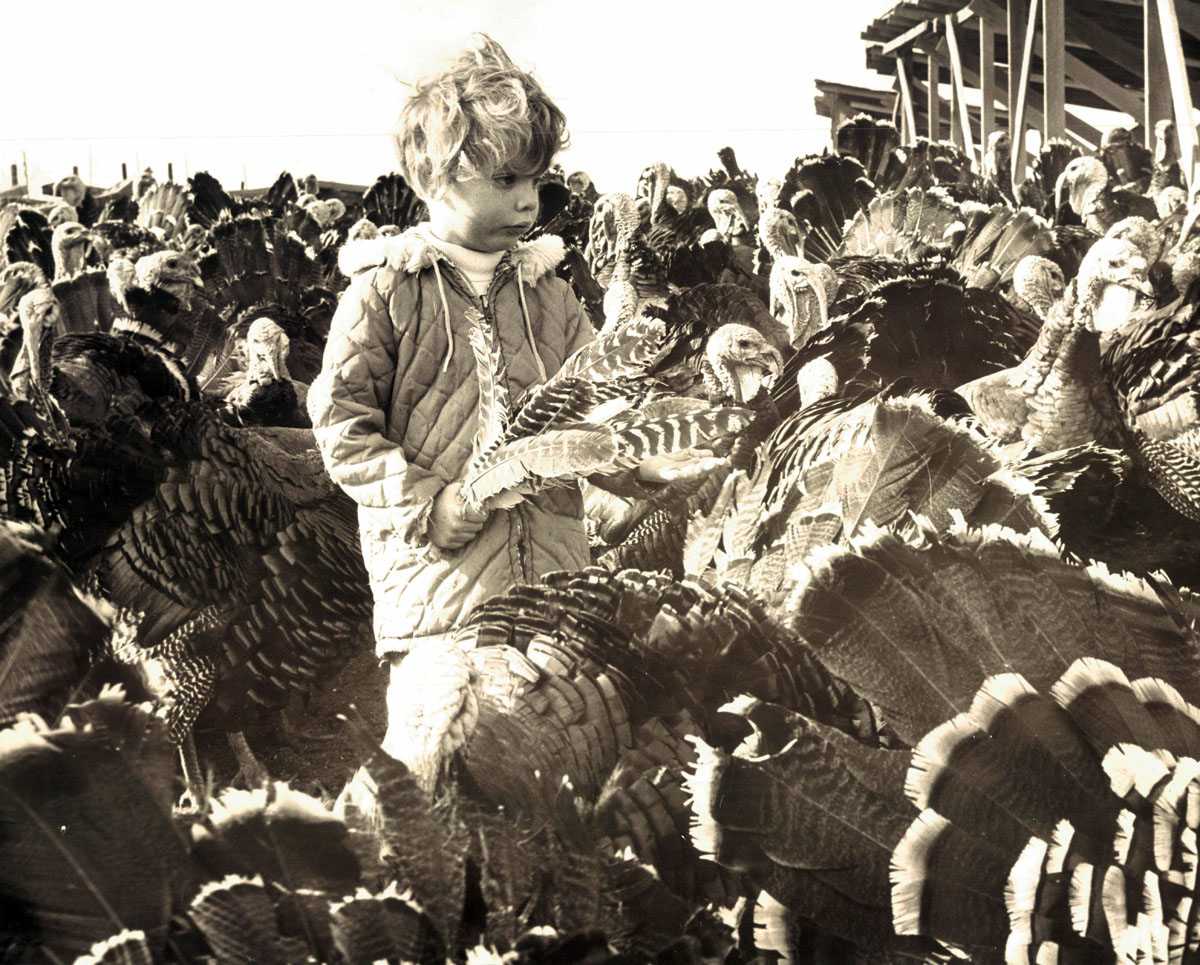 From the vault: Baltimore-area turkey farms