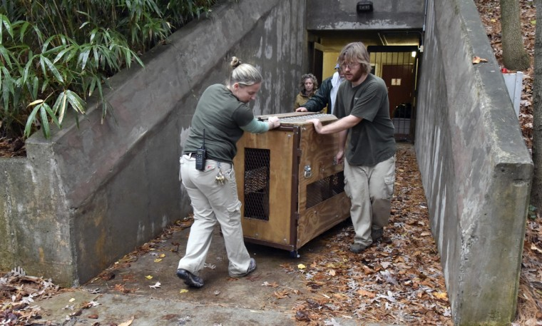 November 19, 2015 - Left to right,  Erin Cantwell, giraffe house area manager, Carey Ricciardone, mammal collection manager, both with The Maryland Zoo in Baltimore, Johnny Binder, general curator for the Cameron Park Zoological and Botanical Society, and Paul Bradenburger, animal keeper at The Maryland Zoo in Baltimore,  move a travel crate containing Leia, a two year and six week old lion born at The Maryland Zoo in Baltimore. (Kim Hairston/Baltimore Sun)