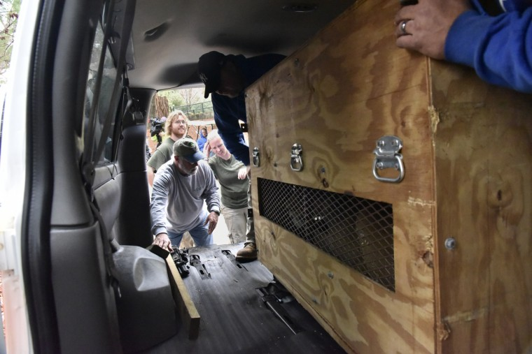 November 19, 2015 - A travel crate that holds Leia, a two year and six week old lioness born at The Maryland Zoo in Baltimore, is loaded onto a Cameron Park Zoological and Botanical Society van. (Kim Hairston/Baltimore Sun)