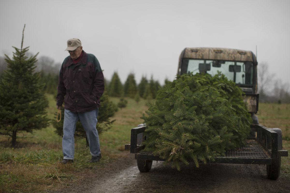 Attractive Christmas Tree Farm Ohio Part - 11: The Baltimore Sun Darkroom