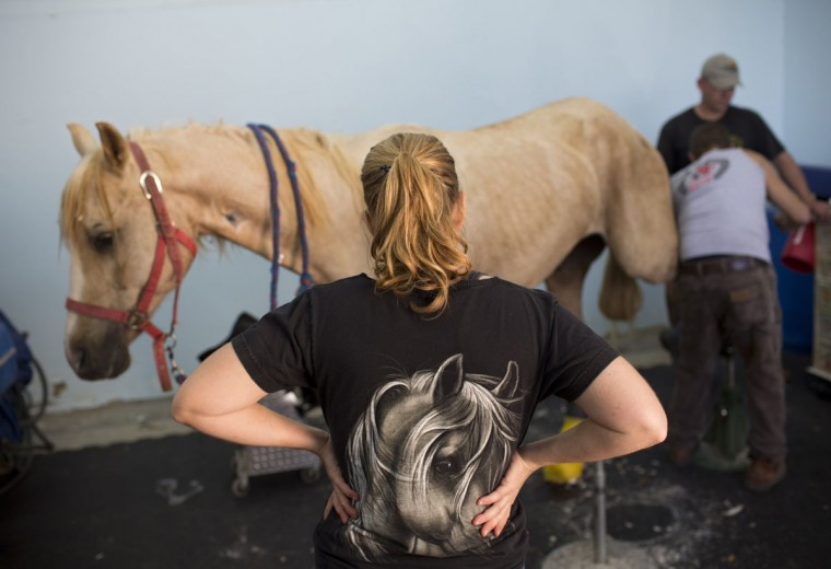 Veterinarians examine a horse after his surgery at the Hebrew University's Koret School of Veterinary Medicine in Rishon Lezion, Israel. Veterinarians at the hospital operate on about two dozen horses a month and rely on elaborate tools and an army of volunteers to safely treat animals that can weigh more than 1,000 pounds (450 kilograms). (AP Photo/Oded Balilty)